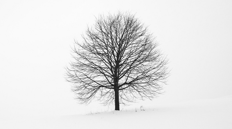 Photo of a tree in snow.